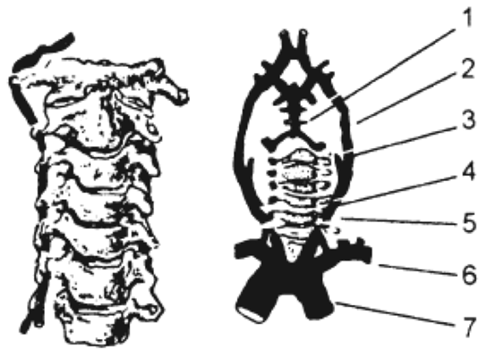 средства изгнания паразитов