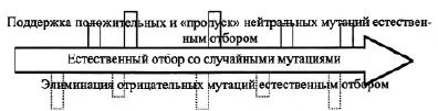 pic_1.1.1.tif